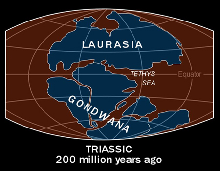 Triassic 200 MYA